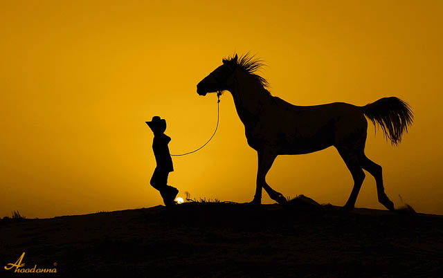horse_photography_19
