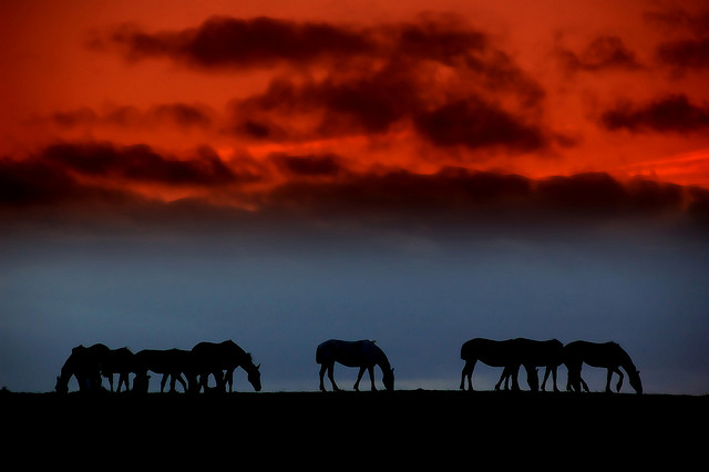 horse_photography_5