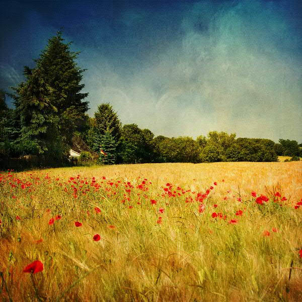 landscape_in_summer_1