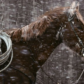 40 Beautiful Examples Of Equine Photography