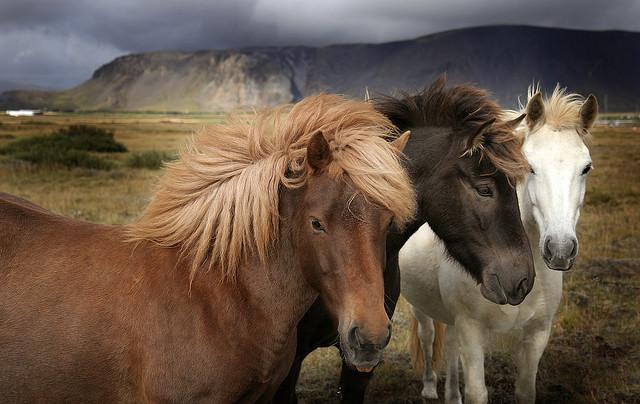 three_horses_6