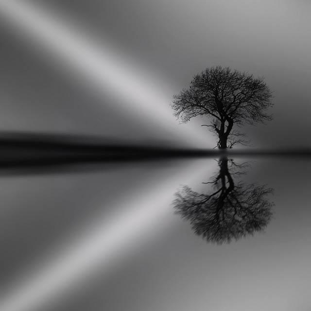 secret_tree_23